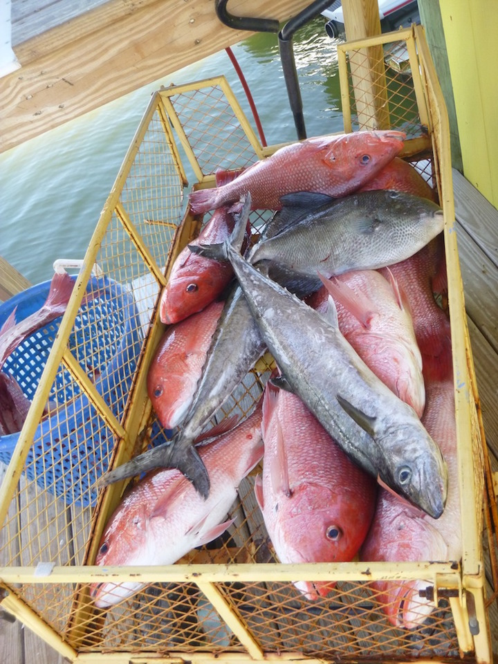 Hey boy ii orange beach alabama offshore deep sea for Orange beach fishing charters
